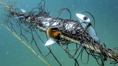 'Senseless': Nets catch 480 animals including many protected species