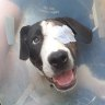 Dog shot in the head finds new family 400 days later