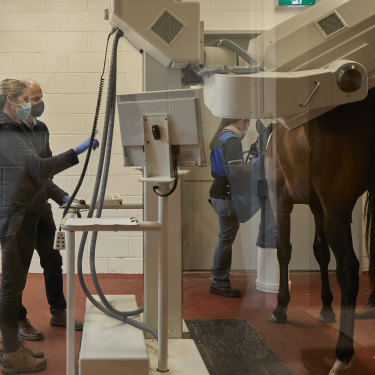 Professor Whitton and his team at work at the U-Vet Equine Centre in Werribee.