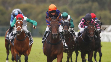 Boom times: Roman Son streaks to victory at Rosehill earlier in the month.