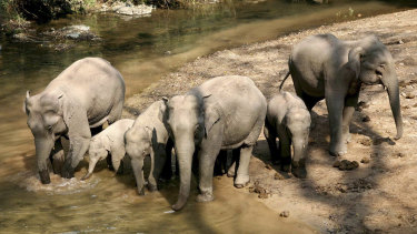 A group of wild elephants is seen in the 'Wild Elephant Valley' in the Dai Autonomous Prefecture of Xishuangbanna, south-west China's Yunnan Province.