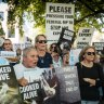 'Beyond belief': Live export corruption inquiry ends in dead end
