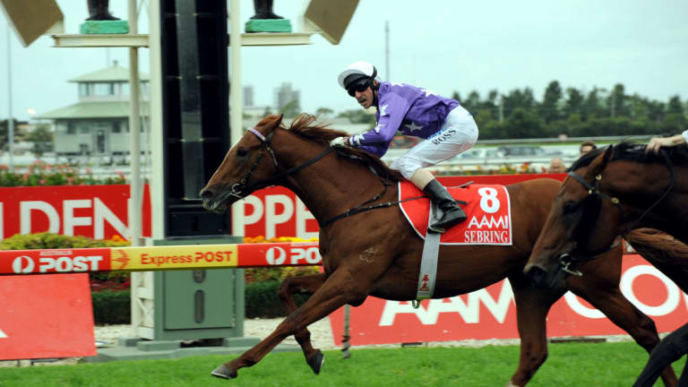 Leaving a legacy: Sebring, a son of More Than Ready, wins the 2008 Golden Slipper.