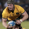 Numbers game: David Pocock should be the Wallabies No.7.