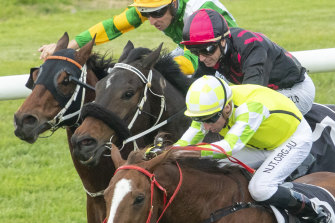 Eduardo in action in the July Sprint at Rosehill Gardens this year.