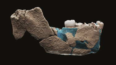 A virtual reconstruction of a human ancestor jaw found in Nesher Ramla, Israel.