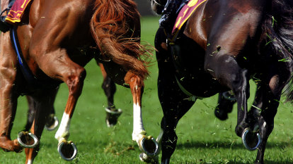Tasmania calls immediate month-long halt to racing
