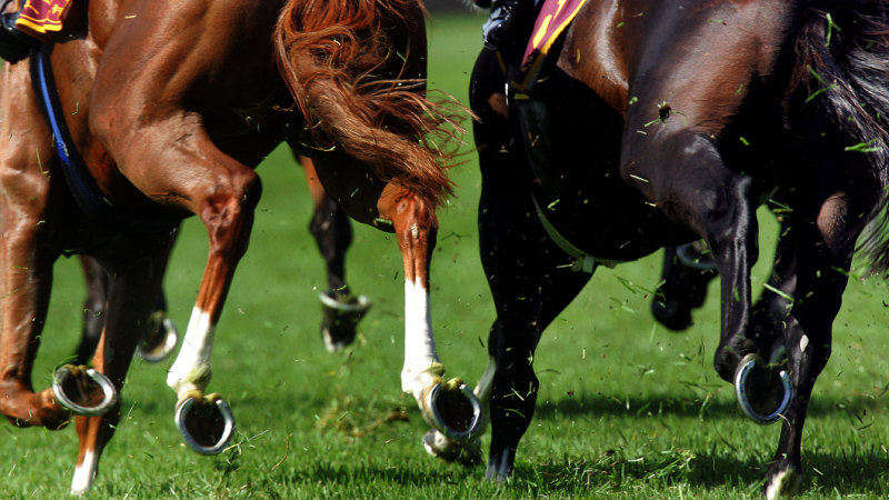 Kew Gardens the top weight for this year's Melbourne Cup