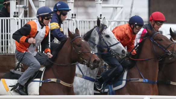 Look at him go! Delight as Chautauqua jumps cleanly at Flemington