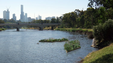 A digital artist impression of the proposed floating 'wetland' that would put local food waste to good use on the Yarra.