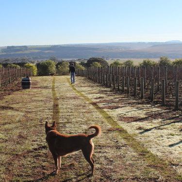 Wine by Farr, Geelong.