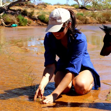 Overseen by Emily the dog, Frances Pollock plants sedges in the Murchison riverbed to help prevent erosion.