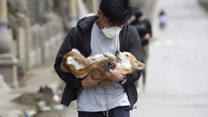 Heartbreaking photos show plight of animals abandoned near Taal volcano