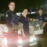Kenny the koala came off second-best after being clipped by a car in Mount Gravatt.