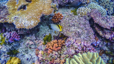 "The Great Barrier Reef Marine Park Authority says limiting global warming to 1.5 degrees is ""critical""."