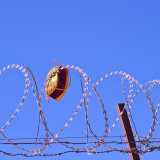 A Uighur dopa caught in a compound's barbed wire.