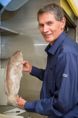 Queensland Museum ichthyologist Jeff Johnson with the Epinephelus fuscomarginatus, a newly described rare species of cod.