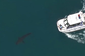 A large shark was filmed swimming nearby following the incident.