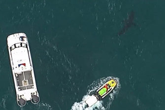 Boats followed the shark after the attack.