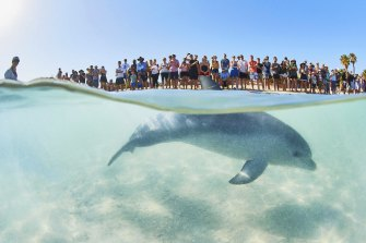 Tourists line up to see the bottlenose pod that visits Monkey Mia in Shark Bay.