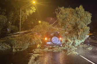 A driver walked away despite this tree falling on his car on the Mitchell Freeway on Saturday night.