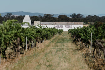 Morris Wines in Rutherglen, Victoria, is known for its fantastic fortifieds: muscats, topaques and tawnies.