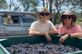 South by South West Wines Mijan Patterson and Livia Maiorana