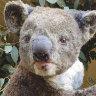 Bushfires take a devastating toll on Kangaroo Island's unique wildlife