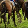 Frustrated trainers want welfare investment to be transparent
