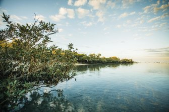 Exmouth Gulf mangroves are such vital nurseries some species' reproductive systems evolved to depend on them.