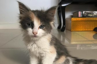 This little kitten, allegedly bought from Con Petropoulos in 2017 was later diagnosed with cat flu.