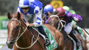 Noble Boy is the favourite for the Country Championships Final.