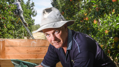 Crunch time for Victoria's apple and pear growers