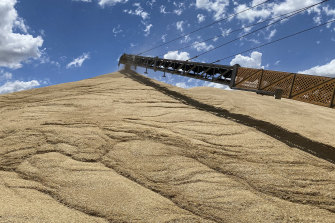 A mountain of grain is flowing into GrainCorp's NSW receival sites.