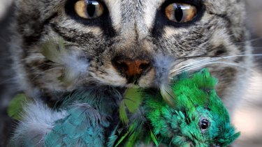 Even if cats don't need to eat, they are programmed to stalk available prey.