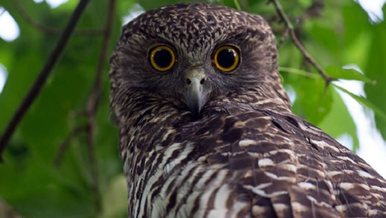 Birdlife Southern Queensland is calling for volunteers for a citizen science monitoring project.