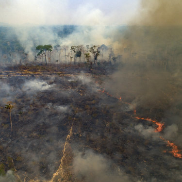 "Large areas of the Amazon rainforest have burnt in recent years, often due to farming and land-clearing. Scientists fear too much fire in the ""lungs of the planet"" could trigger a tipping point of irreversible landscape change from jungle to savannah."