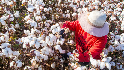 Ban Xinjiang cotton and other slave labour products, Senate committee urges
