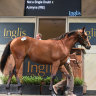 Economic climate to test Inglis Easter yearling sales