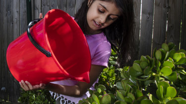 Watering from a bucket is mandatory in Sydney under level 2 water restrictions.