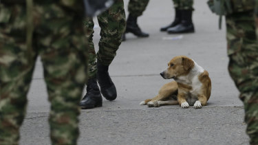 A dog sits among Colombian soldiers near the Simon Bolivar International Bridge in La Parada, near Cucuta, Colombia, on the border with Venezuela.