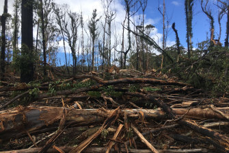 Logging operations in burnt forests on the state's South Coast after the 2019-20 bushfires.
