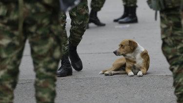 A dog sits among Colombian soldiers near the Simon Bolivar International Bridge in La Parada, near Cucuta, Colombia, on the border with Venezuela.