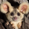 'Australia's biodiversity just got a lot richer': Two new mammals discovered