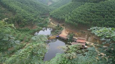 A plantation ofEucalyptus tereticornisin Guangxi, southern China.