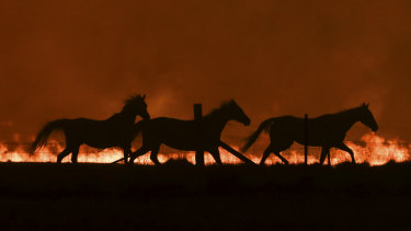 Horses fleeing as a  bushfire burning south of Canberra threatens  communities in Bumbalong and the region on Saturday.