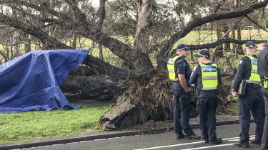 The tree that fell in Princes Park, killing a woman.