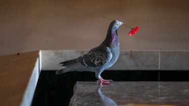 The pigeon stole poppies from the Tomb of the Unknown Soldier to make its new home.