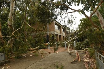 Trees collapse near Davidson High School in Frenchs Forest.