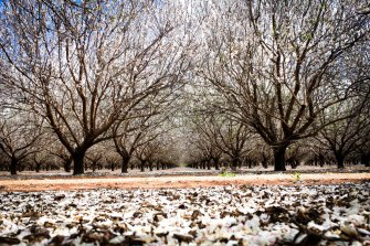 A Canadian pension fund has snapped up 12,000 hectares of almond orchards and forked out $490m for water rights.